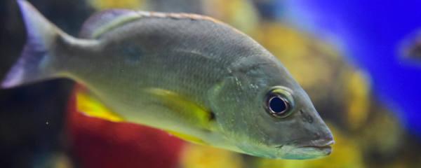 鱼离开水为什么会死,什么鱼离水还能活