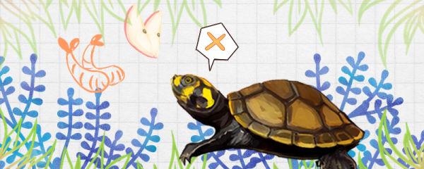黄头侧颈龟不吃东西是什么原因,怎么治疗