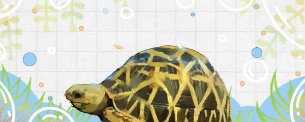 星龟好养吗,怎么养
