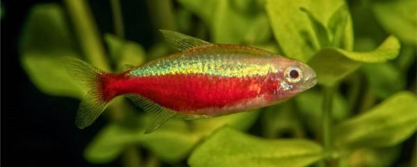 草缸适合养什么鱼,草缸养鱼要注意什么