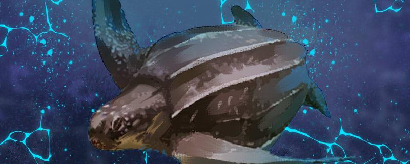 棱皮龟能长到多大,能活多久