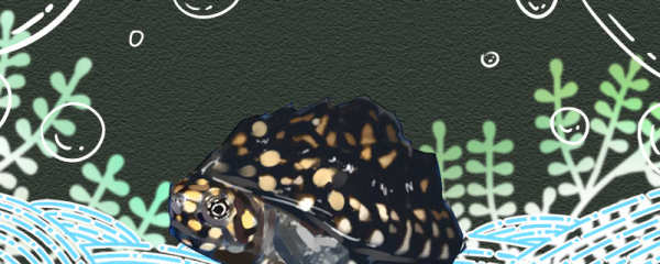斑点池龟好养吗,需要晒太阳吗