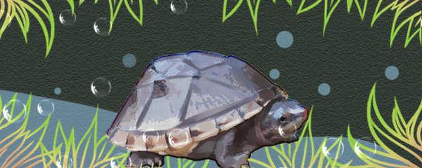 蛋龟好养吗,怎么养