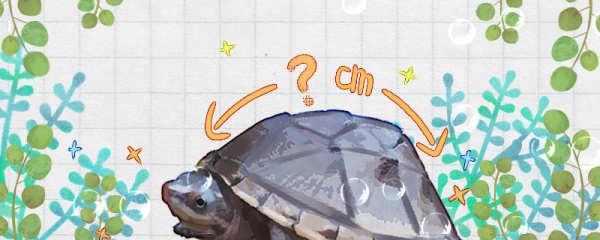 蛋龟能长多大,能活多久