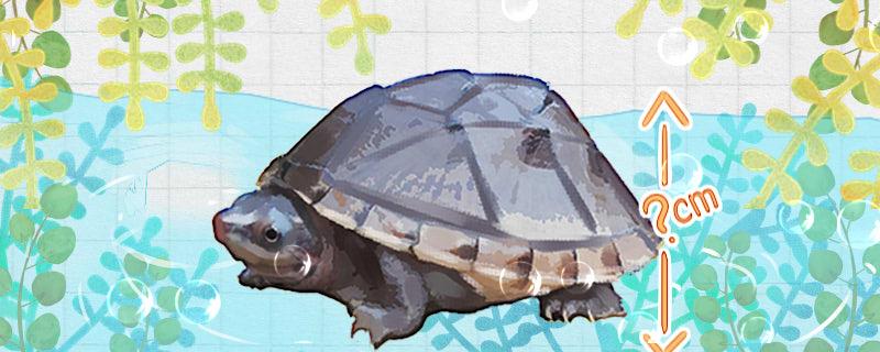 蛋龟是深水龟吗,水深多少合适