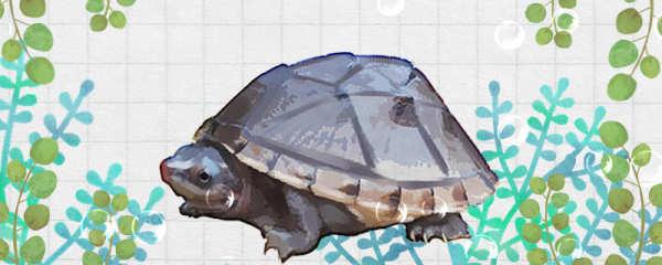 蛋龟需要晒背吗,需要加热吗