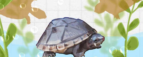 蛋龟有哪些品种,什么品种好养