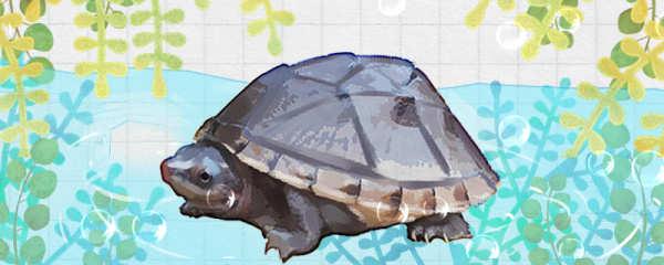 蛋龟怎么养,需要晒太阳吗