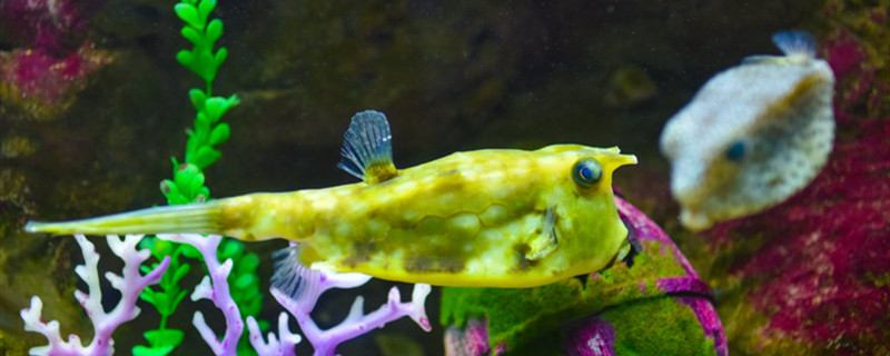 缸壁除藻用什么鱼,除藻鱼类有哪些
