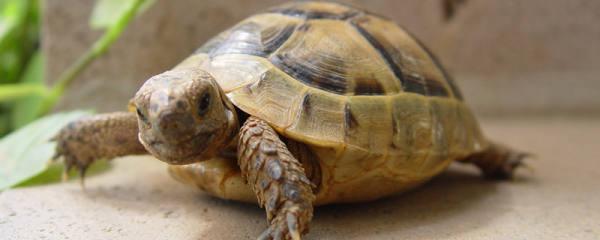 乌龟能晒太阳吗,晒太阳要注意什么