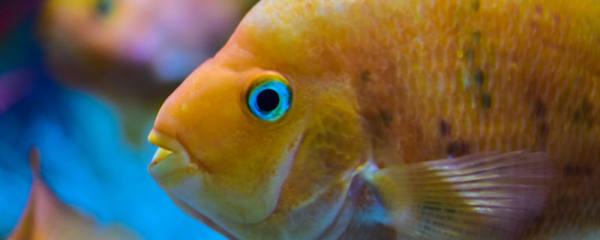 过滤一直开鱼会累死吗,鱼缸有哪些过滤器