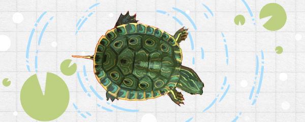 甜甜圈龟是深水龟吗,用多深的水合适