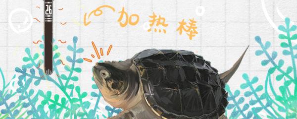 鳄龟需要加热棒吗,最低温度多少会死