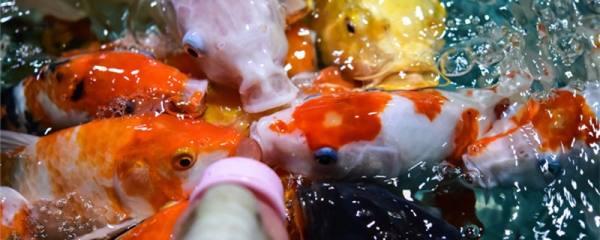 鱼塘水浑浊怎样变清,如何避免鱼塘水变浑