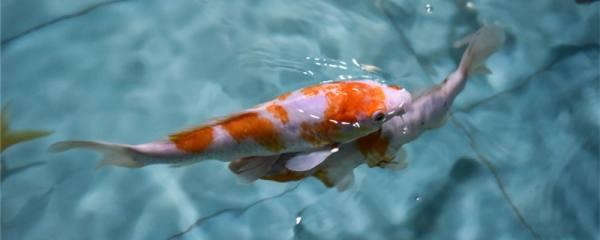 鱼塘养鱼喂什么长得快,四种饲料有哪些不同