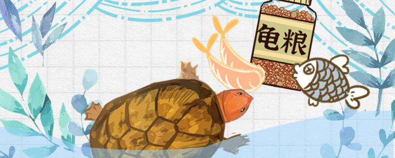 红面蛋龟吃什么,多久喂一次