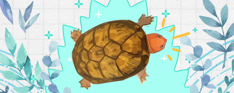 红面蛋龟怎么养才发色,吃什么饲料发色好