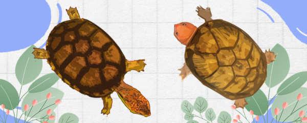 斑纹泥龟和红面蛋龟有什么区别,可以一起养吗