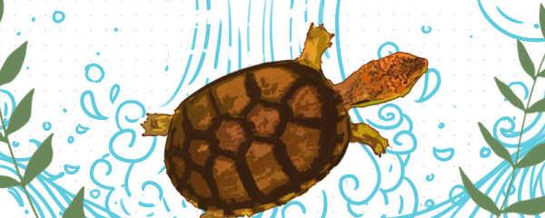斑纹泥龟在什么环境饲养好,怎么饲养好