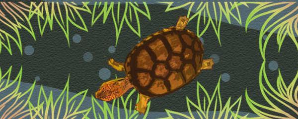 斑纹泥龟好养吗,怎么养