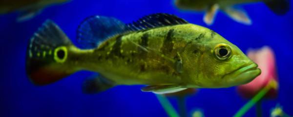 鱼吃什么食物,鱼类食性有几种