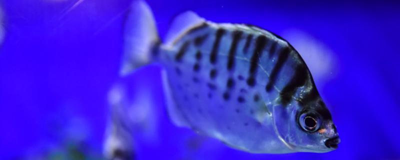 氧气泵有震动不出气泡,鱼缺氧有什么表现-轻博客