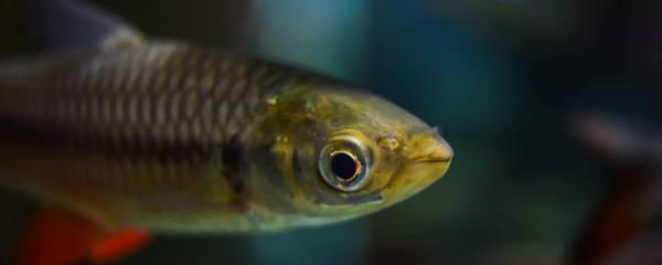鱼靠什么游动,各种鱼鳍的作用是什么