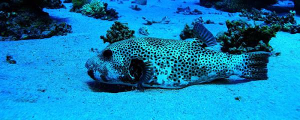 观赏鱼为什么养不长时间就会死,鱼活不长有哪些原因