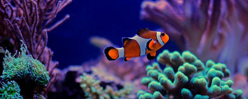 鱼会装死吗,为什么要装死-轻博客