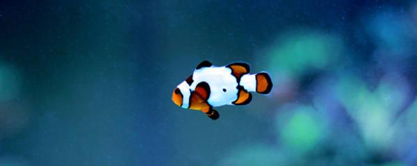 鱼是不是动物,这种动物有哪些特征