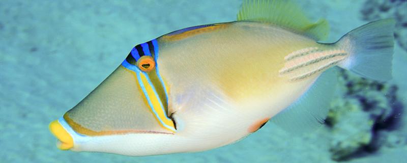 鱼缸水温30度会死鱼吗,如何给鱼缸升温