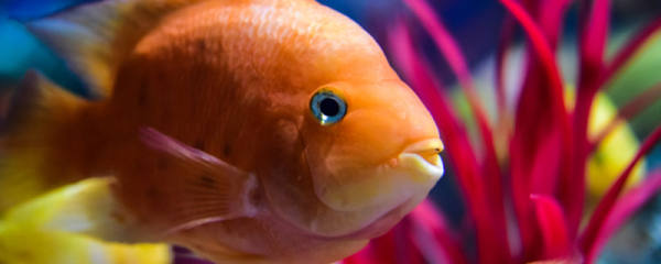 鱼缸为什么要贴黑色背景,贴背景有什么好处