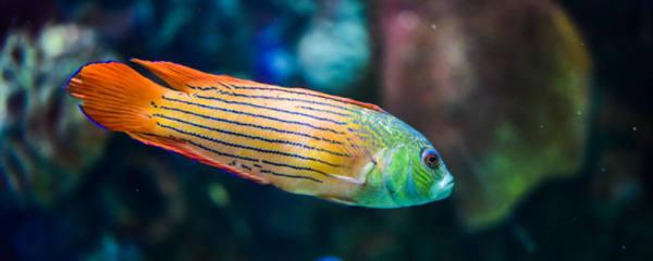 鱼缸为什么要换水,如何换水