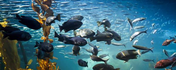 闯缸鱼几天不死算成功,养多久才能换鱼