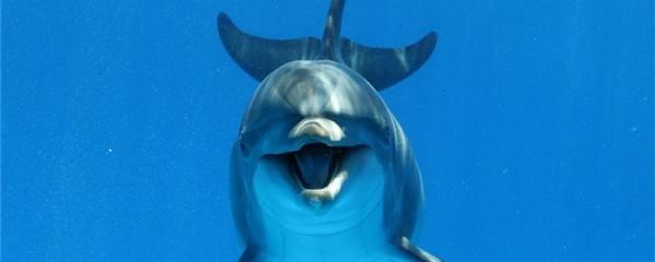 海豚有多少种,常见品种有哪些