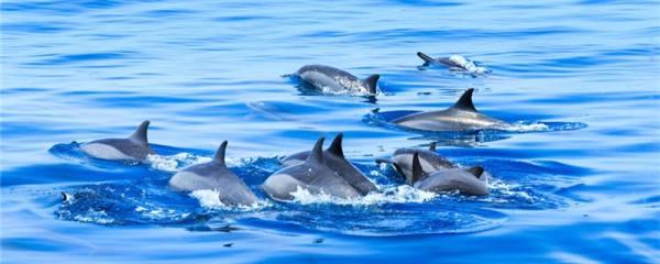海豚是鱼吗,是哺乳类动物吗