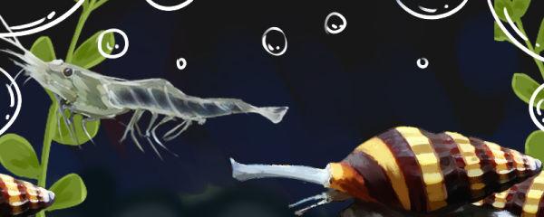 杀手螺可以和虾混养吗,可以和鱼混养吗