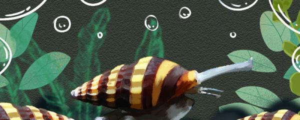 杀手螺吃水草吗,能不能放草缸养