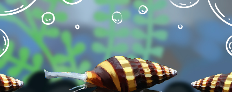 杀手螺吃什么,能吃藻吗