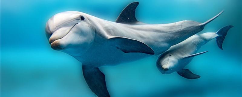 海豚吃什么食物,一天要吃多少东西-轻博客