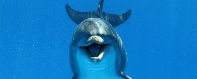 海豚的尾巴长什么样,有什么作用