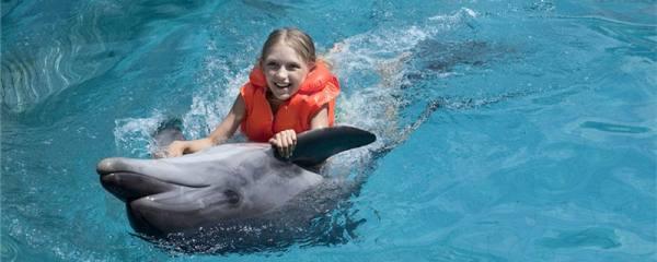 海豚能听懂人说话吗,能和人互动吗