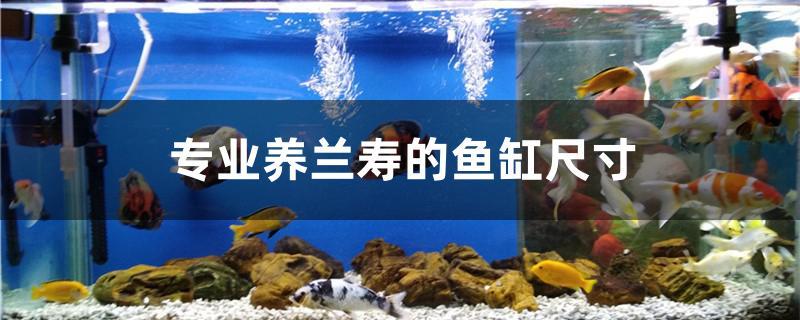 1.2米鱼缸养锦鲤_专业养兰寿的鱼缸尺寸是多少 - 鱼百科