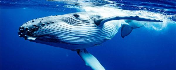 鲸落是什么意思,对海洋有什么意义