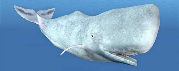 鲸鱼为什么会喷水,什么时候喷水