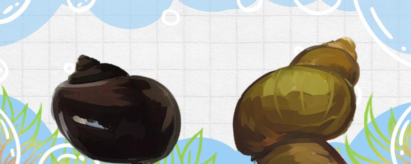 田螺和福寿螺的区别是什么,能一起养吗-轻博客