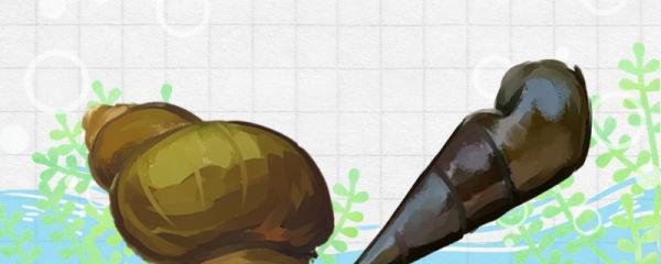 石螺和田螺的区别是什么,能一起养吗