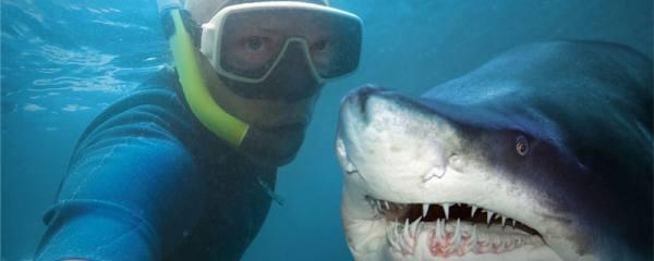 鲨鱼会主动攻击人类吗,会吃人吗