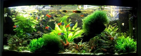 新鱼缸第一次怎样养水,养水几天可以养鱼