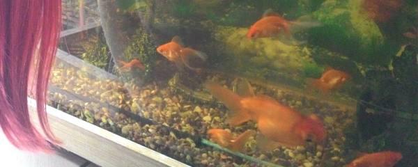 鱼缸的水发白是怎么回事,该怎么处理